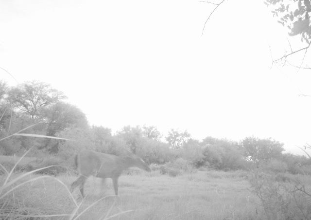 Wild Texas Horses